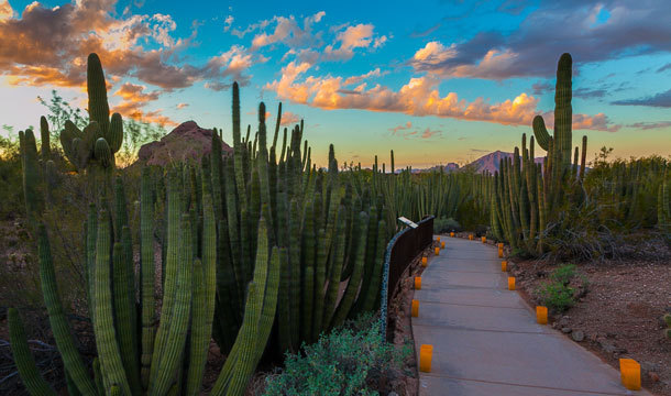 Desert Botanical Garden, Phoenix Az-Photo by Adam Rodrigues